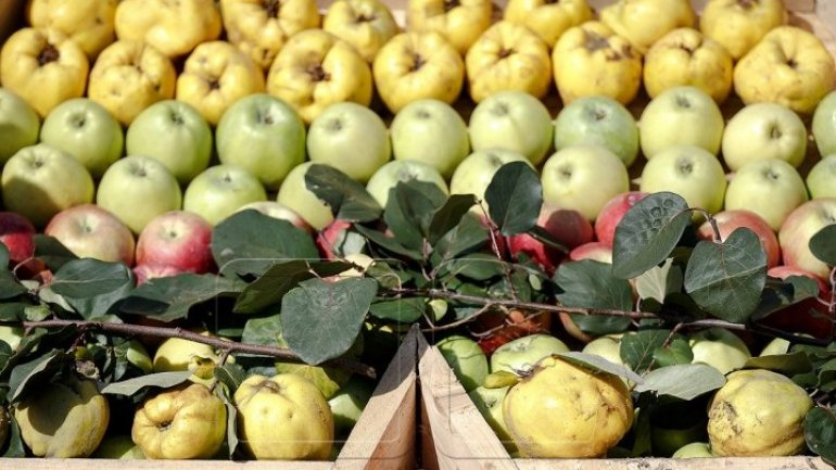 Moldovan fruits won contracts to appear in Romanian supermarkets