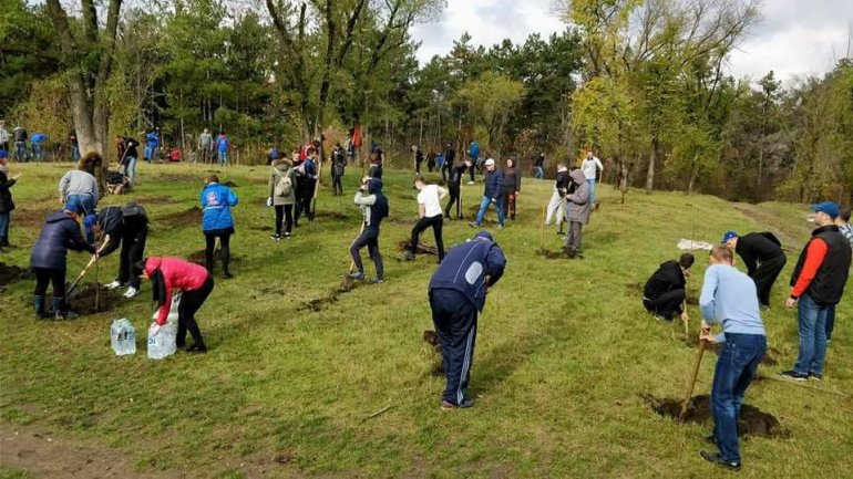 Young democrats teamed up to save environment on National Tree Day in Bălți