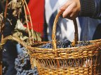 Selected wines and traditional Gagauz cuisine exposed in Comrat's Wine Day