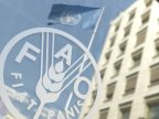 FAO: Global Food Prices lower as production reaches new highs