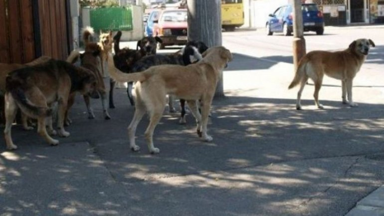 New law for stray animal control to be dawn up by December 1