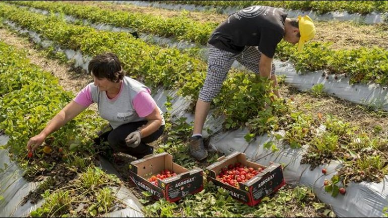 Two new FAO projects to be implemented in Moldova by 2019