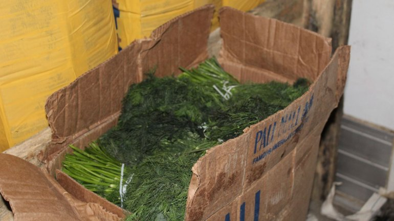 18 tons of dill and parsley from Uzbekistan denied entry in Republic of Moldova