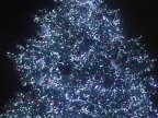 Christmas tree brightened up with lights at capital center (video)