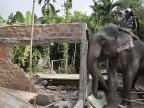 Indian police uses elephants to demolish dwellings trespassing their natural habitat