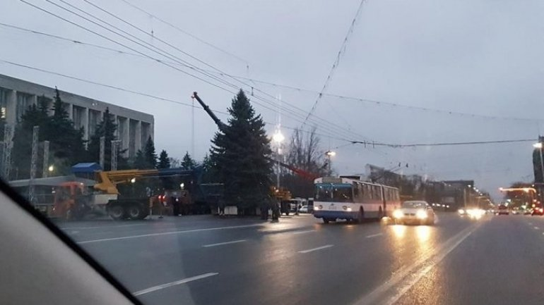 Chisinau's Christmas drama. How two fir trees replaced during a day