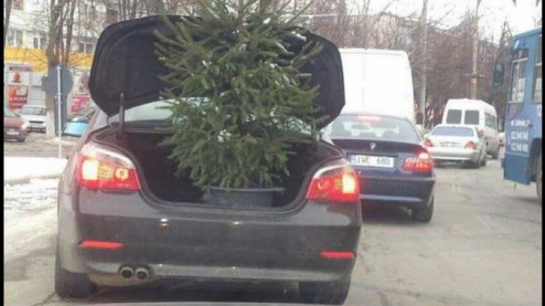 Photo of the day. How a Christmas tree is paraded around the Capital