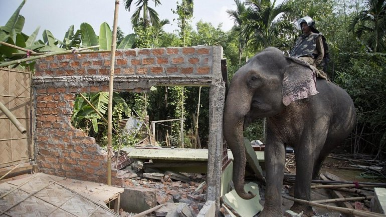 Indian police uses elephants to demolish dwellings trespassing their natural habitat