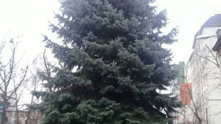 Image of new christmas tree replaced with old one transported from Ukraine