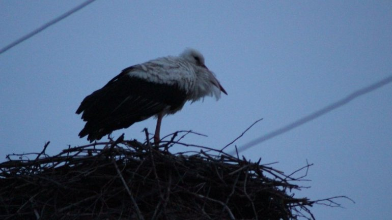 Unusual sight for December. Heron decided to remain in Cimişlia for winter