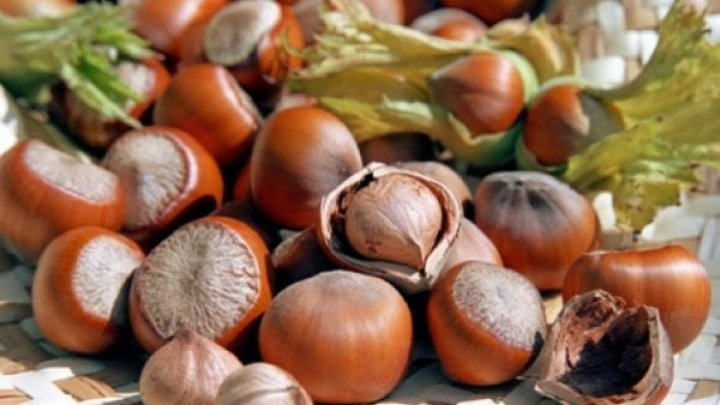 Moldovan producers signed contracts with Italian importers on hazelnut in chocolates