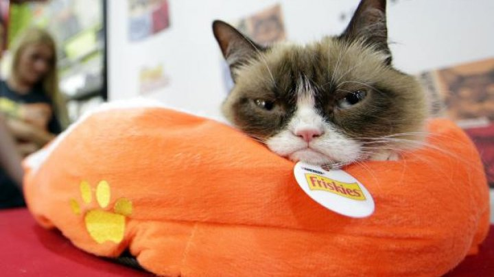 Grumpy cat won copyright lawsuit, bringing $750,000 in damages to its owners