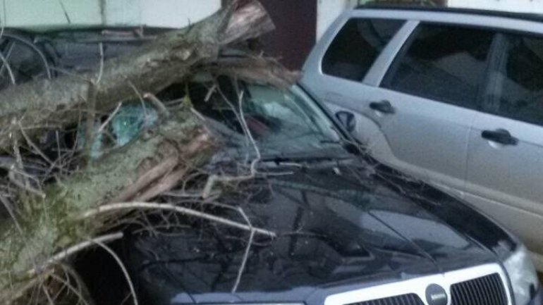 Capital local shocked as his car seriously damaged by falling tree