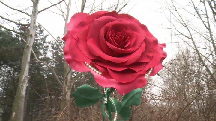 Moldova's largest rose raised in Rose Valley park of Chisinau