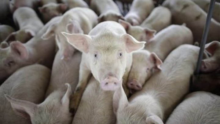 Potential trade war: China threatens to slap 25 percent tariff on American pork