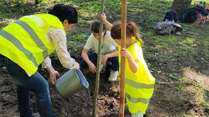 Interim Mayor and her family plant trees  in Valea Trandafirilor Park