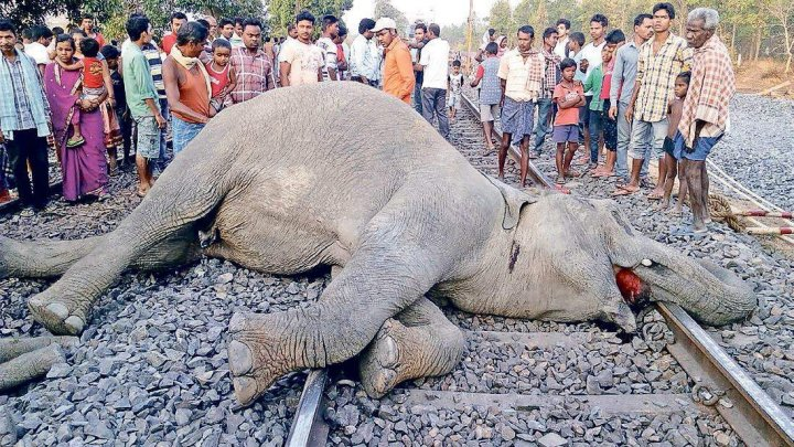 Elephants killed by train in India while crossing rail tracks