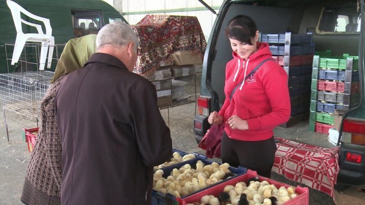 Chicks and ducklings are sold in the Capital's poultry market