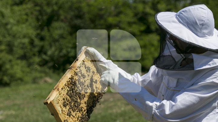 Moldovan who pulls off honey harvest thanks to AOAM reward (photoreport)