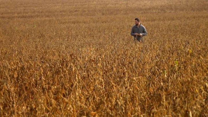 Reviving Ukraine's Breadbasket. Investing in grain policies, farmers and infrastructure