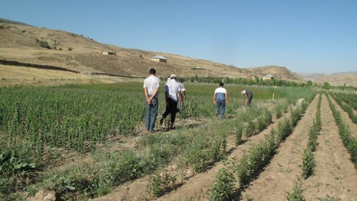 Experts: Organic produce can spur development in Central Asia