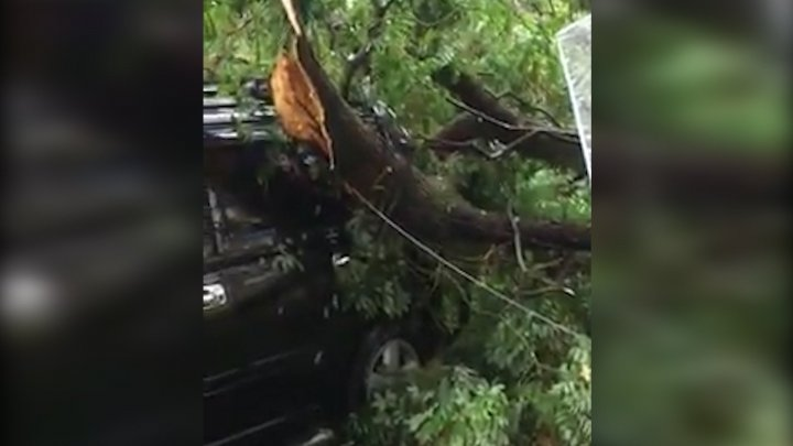 Bad luck for a driver in Capital. Tree fell over his car due to strong rain