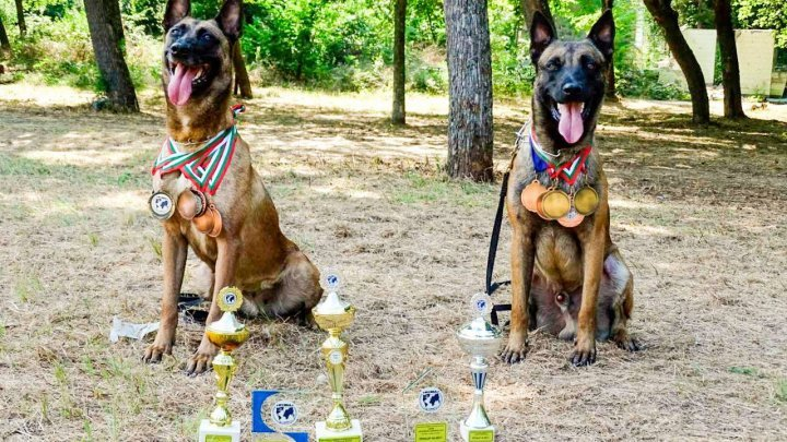 Border Police dogs attended international competition in Bulgaria