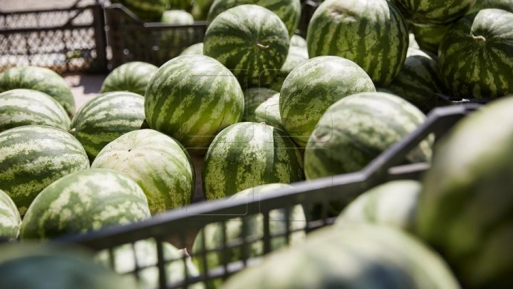 Such a summer! What's found inside watermelon from market that terrified Moldovans