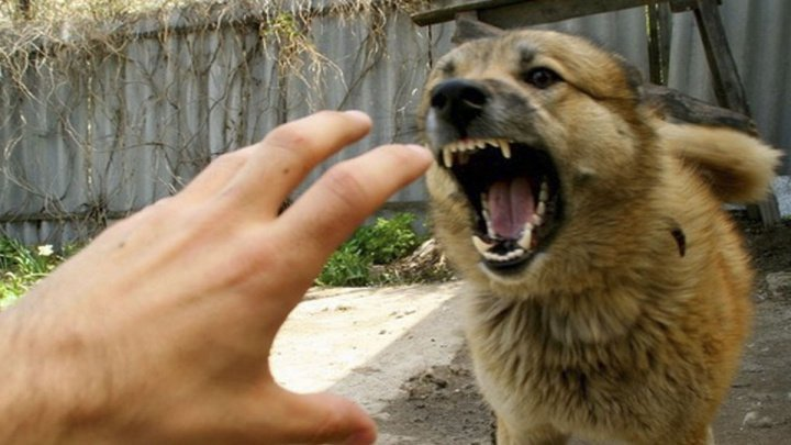Three new cases of rabies confirmed in Moldova
