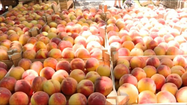 Peach festival gathered dozen producers in Tudora village