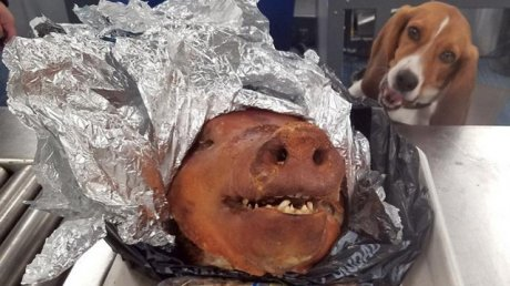 Roasted pig found in luggage of passenger at Atlanta Airport