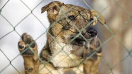 Over 300 dogs within a Chisinau asylum at risk of starvation