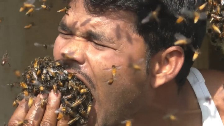 Watch how a honey collector grabs handfuls of bees and stuffs them in mouth before shoving them down his shirt