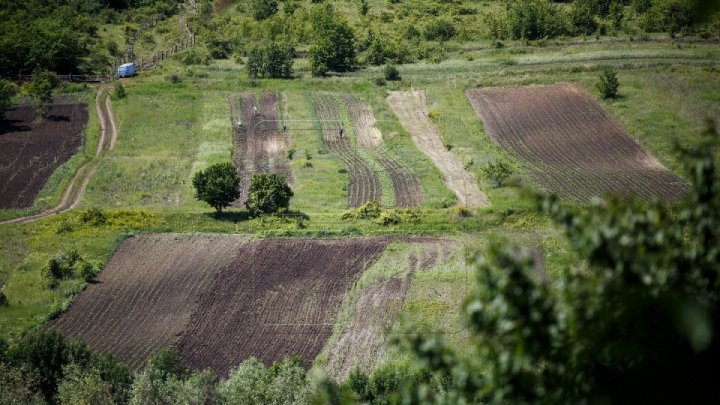 Good news! Farmers await abundant crops within favorable conditions