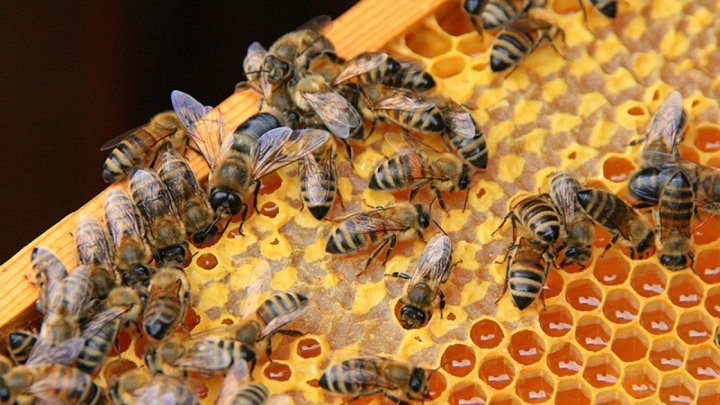 Apiarists map out bees for new pollination season