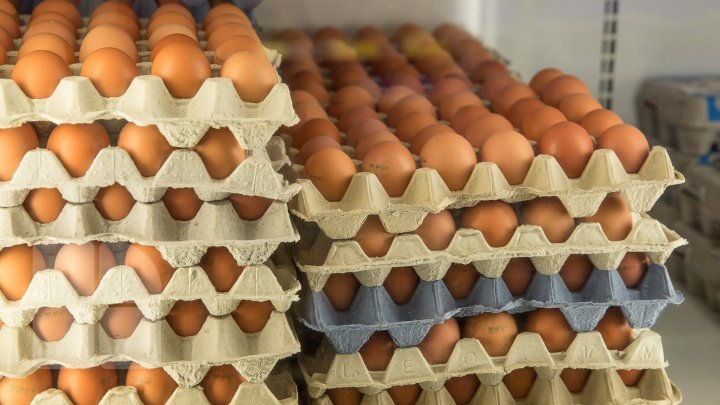 GOOD NEWS for poultry farmers. Eggs and poultry meat could reach consumers in the EU
