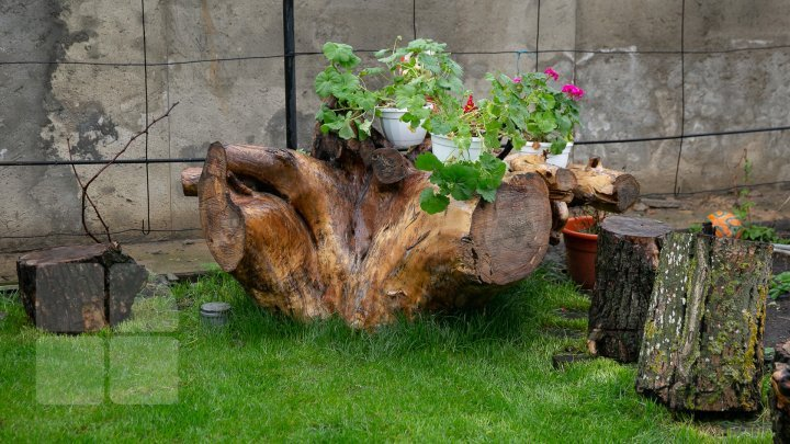 Moldovan wood-haunter makes marvelous masterpiece from tree roots