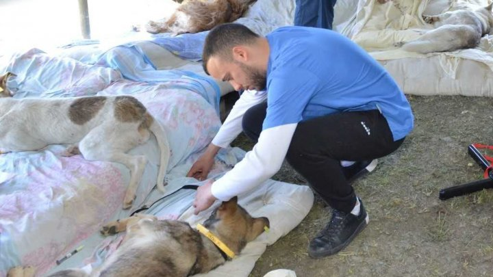 15 american vets came in Moldova to help sterilizing homeless dogs (PHOTO)