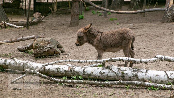 Chisinau Zoo found method to help animals escape heat (PHOTO)