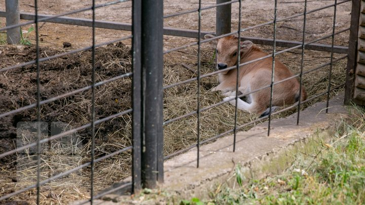 Chisinau Zoo found method to help animals escape heat (PHOTO)