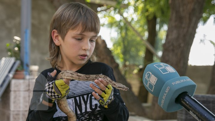 Meet the nine-year-old boy who raises snakes as his absorbing hobby (photo report)