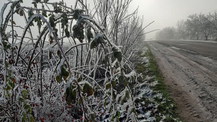Freezing rain trees, a fairy tale landscape, captured in Soroca