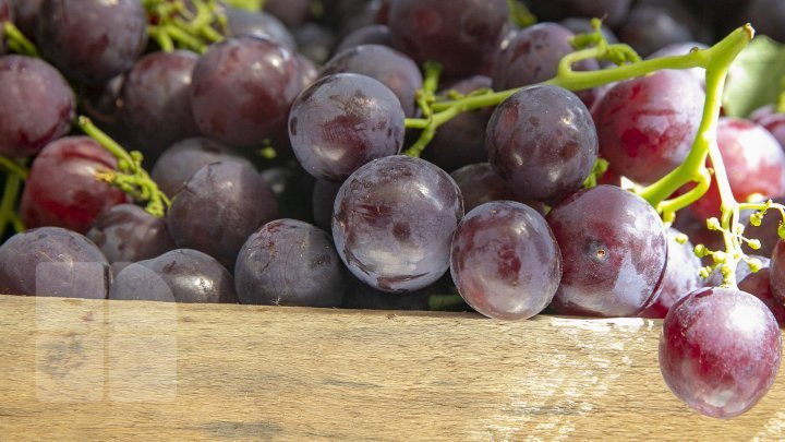 Moldova to export double table grapes to EU duty-free