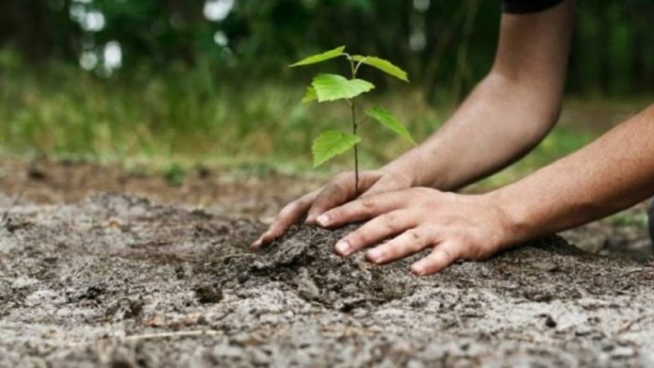 12 million trees will be planted in Moldova. Foresters will go to schools and kindergartens to promote the green campaign
