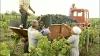 Rusia a interzis importul a 45 de mii de butuci de struguri din Moldova