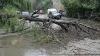 Un copac s-a prăbuşit la intersecţia străzilor Serghei Lazo şi 31 August din capitală