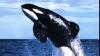 O balenă, de peste zece metri lungime, a sărit deasupra unei bărci ce plutea lângă Cape Town