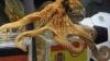Caracatiţa Paul, care a prezis rezultatul meciurilor pentru Cupa Mondială, nu va fi transferată în Spania