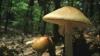 În ultimele 24 de ore, nouă oameni din municipiul Chişinău s-au intoxicat cu ciuperci