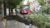 Din cauza furtunii din această noapte, mai mulţi copaci din capitală au fost doborâţi